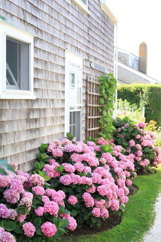 hortenzije u dvoristu