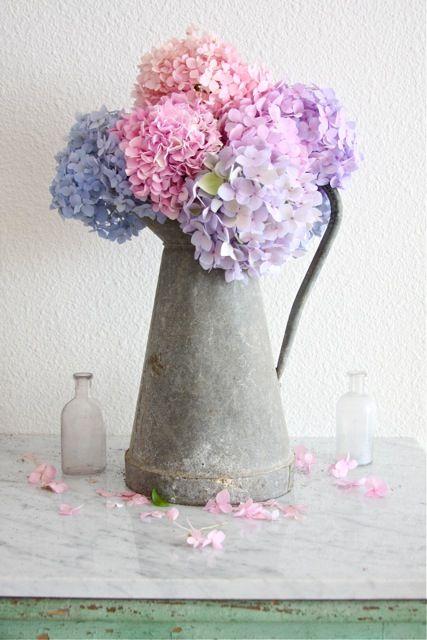 hortenzije sve to vam je potrebno za rasko an cvjetni dekor dom info. Black Bedroom Furniture Sets. Home Design Ideas