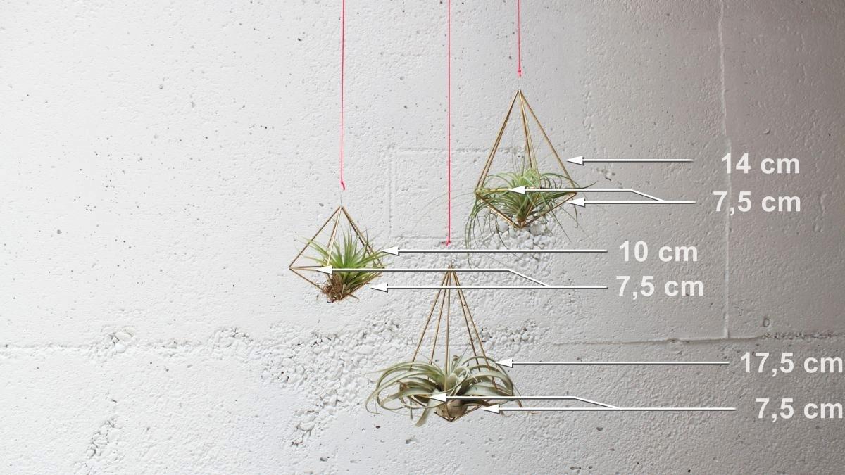 Geometrijski držač za vazdušne biljke (5)