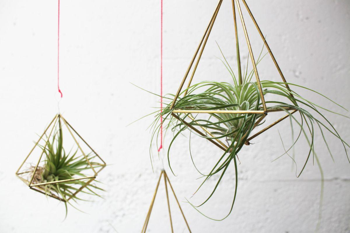 držač za biljke