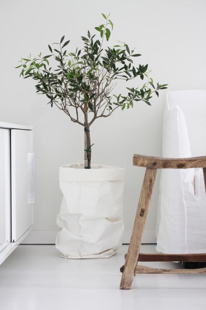 drvo u saksiji u enterijeru