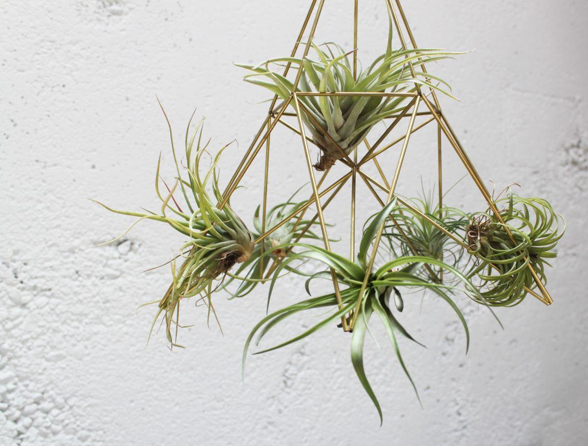 drzac za biljke 2