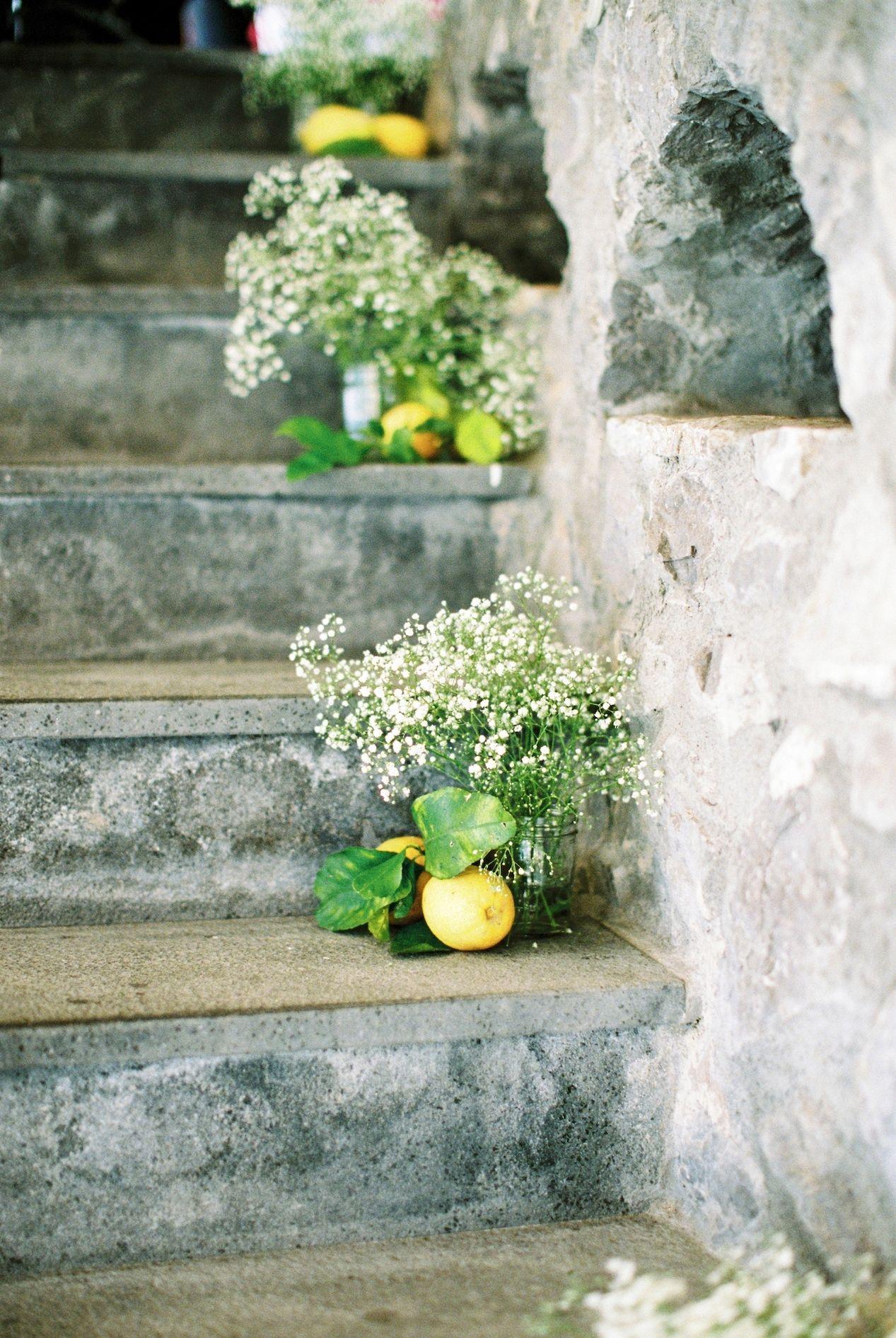 limun cvijece