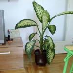 Ove biljke držite podalje od djece