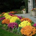 Tri načina da zaštite biljke od jakih kiša