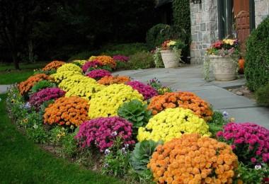 jesenje cvijece