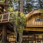 Microsoft zaposlenicima napravio kućice na drvetu
