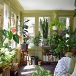 10 pravila za njegu kućnih biljaka tokom jeseni i zime