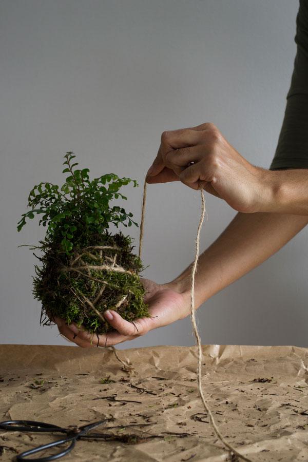 kako napraviti kokedama biljka