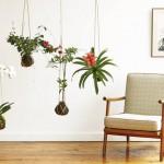 Kokedama: Drugačiji i zabavan način uzgoja biljaka
