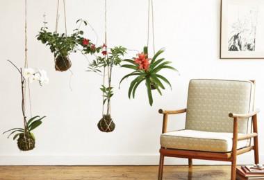 kokedama biljke
