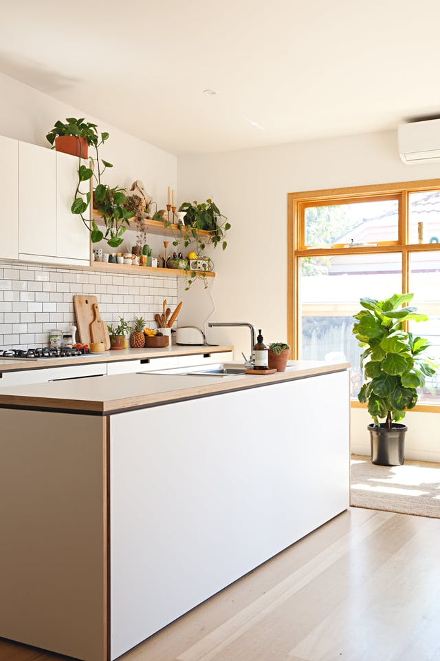 biljke kuhinja