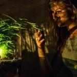 Lampa koja radi na zelenu biljku