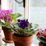 Kako zimi sačuvati najčešće sobne biljke