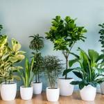 Koju biljku staviti u koju sobu?