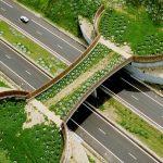 13 sjajnih zelenih mostova za životinje