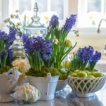 Zumbuli – za vedre boje i opojan miris u domu