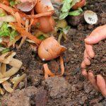 Umjesto bacanja ostataka hrane napravite organsko gnojivo, evo kako