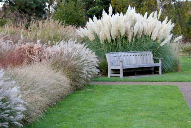 pampas trava u dvoristu