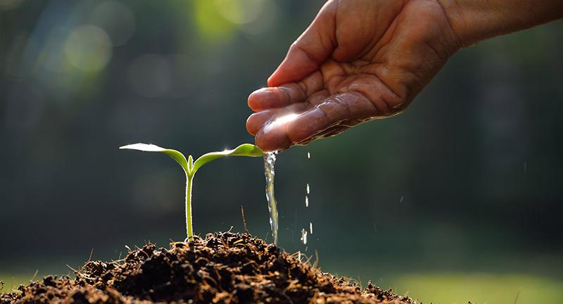 pravilno zalivanje biljaka