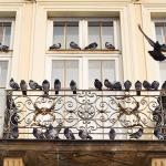 Nepozvani gosti: Kako zaštititi balkon od golubova