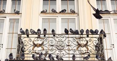 kako zastiti balkon od golubova