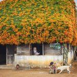 Skromna kućica sa čarobnim krovom od cvijeća