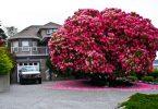 najljepša stabla