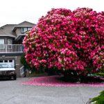 Najljepša stabla: Čarolija među krošnjama