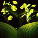 Naučnici s uglednog MIT-a razvili biljke koje emituju svjetlost