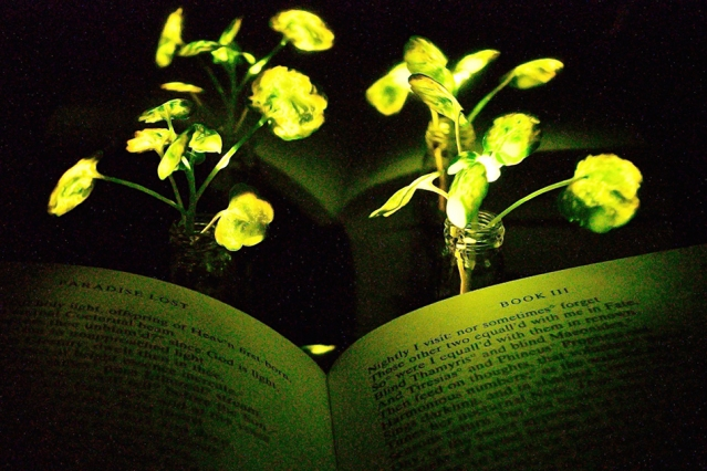 svjetlece biljke
