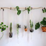 Napravite najbolju prihranu za biljke od tri sastojka koja imate u kući