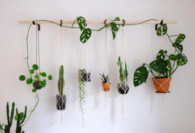 biljke saksije