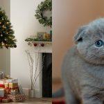 Jedan trgovački lanac je osmislio jelke za vlasnike mačaka