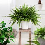 Sobne biljke koje bi trebao da ima svaki dnevni boravak