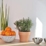 Biljke koje treba izbaciti iz kuće