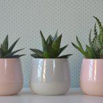 10 kućnih biljaka koje će preživjeti i uz minimalnu brigu