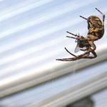 Pročitajte zašto ipak ne trebate ubijati pauke na koje naiđete u kući