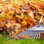 Opalo lišće je odlično prirodno gnojivo za vaše travnjake