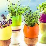 Čiste i kamenac: Upotrebe ljuske jajeta kojih se nikada ne biste dosjetili