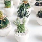 Mini-kaktusi, novi zeleni trend uređenja enterijera