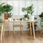 Dašak tropskih krajeva u vašem domu