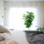 Da li je loše držati biljke u spavaćoj sobi?