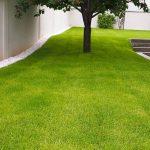 Izrada travnjaka – kako i kada sijati travu?