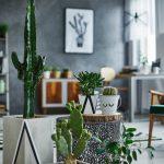 Ukrasne biljke koje će preživjeti jesen i zimu